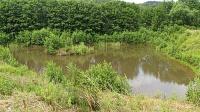 Bild Großes Ersatzlaichgewässer nach einigen Jahren Sukzession