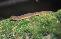 Bild Weibchen