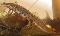 Bild Männchen